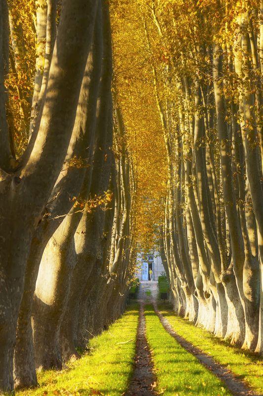 осень Welcome, Autumn!photo preview