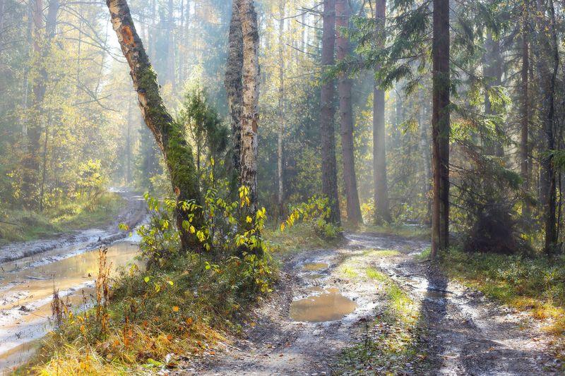 осень лес дороги свет Осенний этюдphoto preview