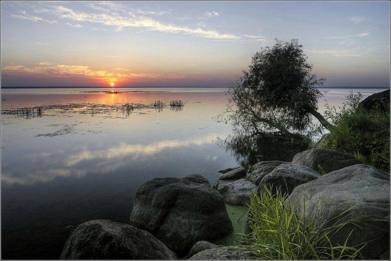 плещеево, озеро, переславль, залесский Tree on the waterphoto preview