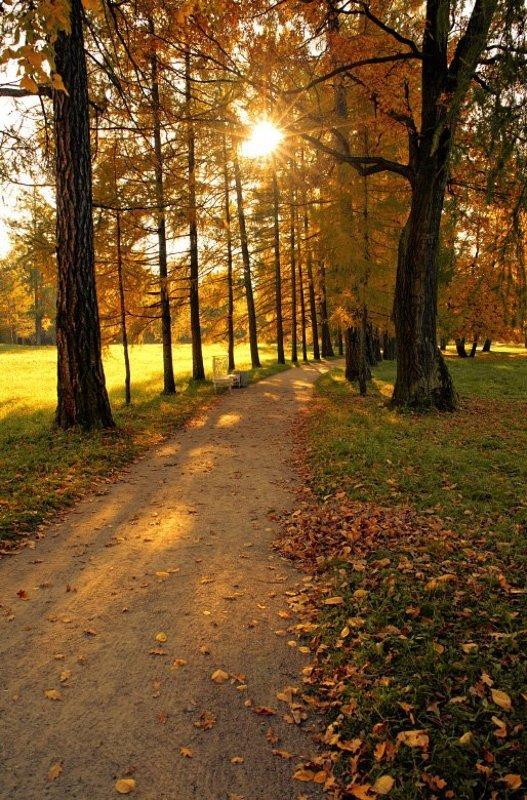 осень , настроение , природа Осенняя прогулка с настроениемphoto preview