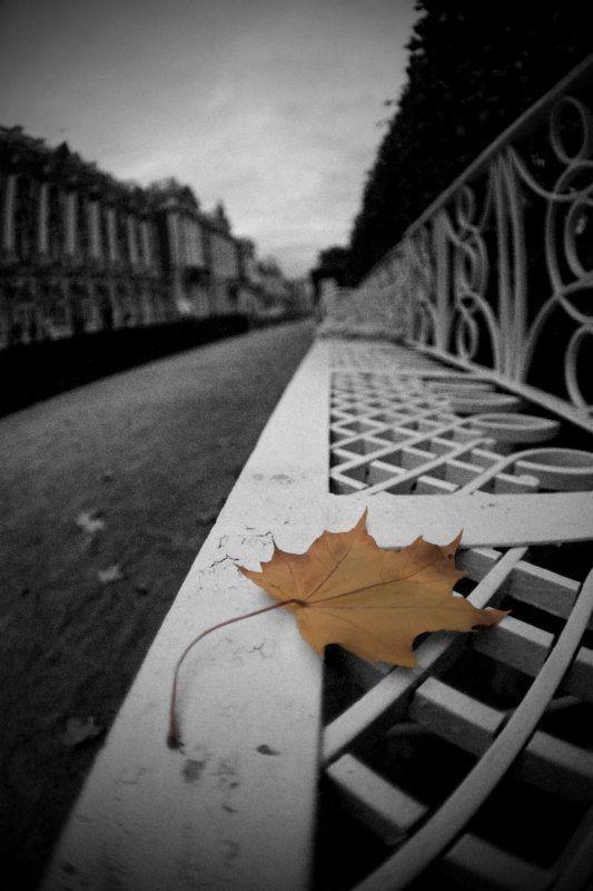 осень , листья ***photo preview