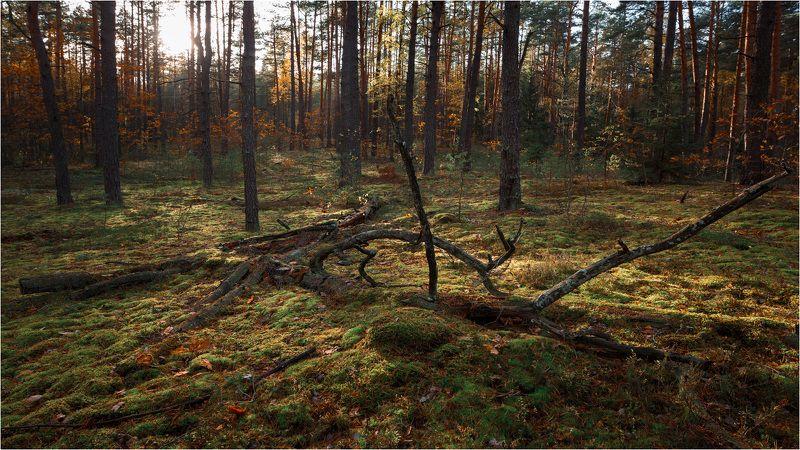 Зарисовки осеннего лесаphoto preview