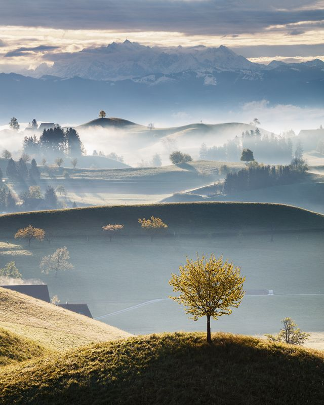 morning, switzerland, light, hills, trees, fog, mist, alps, mountains, spring Misty Morning in the Shirephoto preview