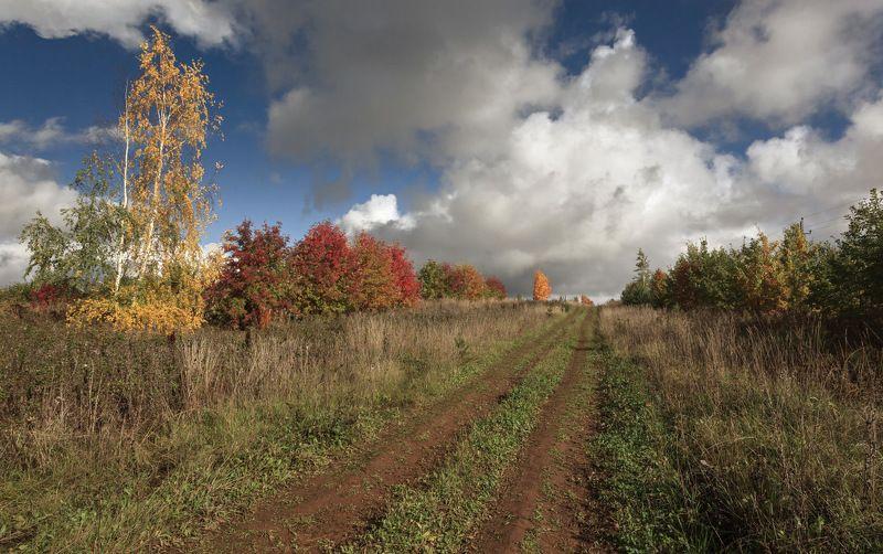 Дорога поле трава зелень деревья кусты лес краски облака осень Солнечные краски осениphoto preview