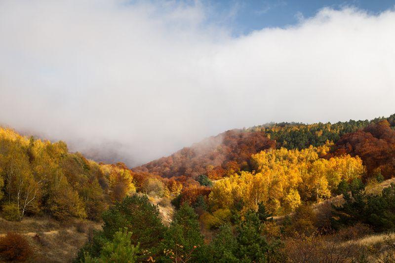 демерджи, цвет, крым, осень Краски осени на гореphoto preview