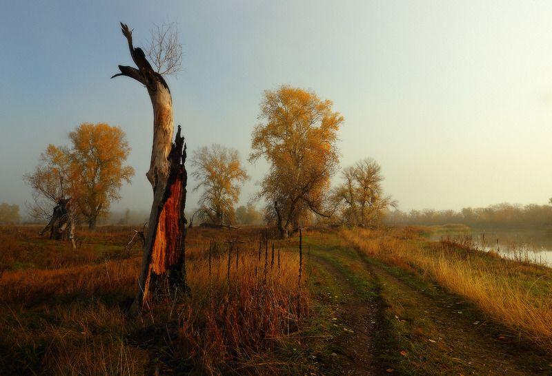 утро осень река дорога Утро греет тёплым светом.photo preview