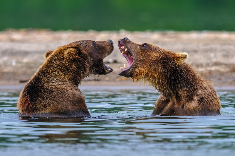 Я вам спою !photo preview