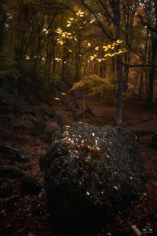 И на камнях растут деревья IIphoto preview