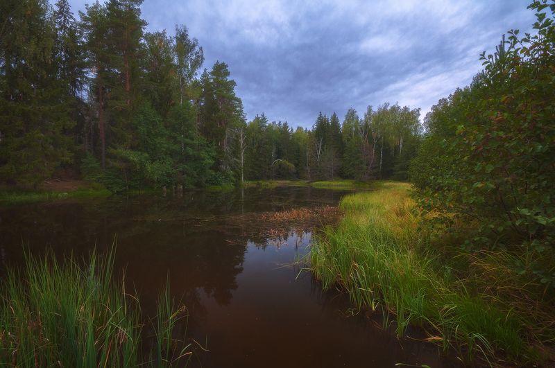 россия, подмосковье, осень, вечер, пруд, лес, деревья, вода, небо, облака, трава, тучи Сентябрьский вечерphoto preview