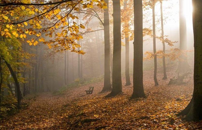 чехия карловы вары осень Золотая осень в Чехии фото превью