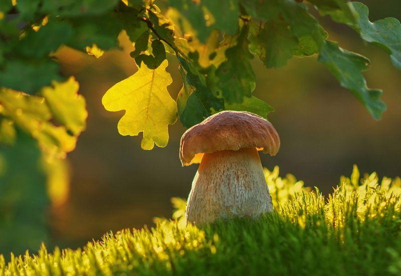 грибы, приода Солнечныйphoto preview