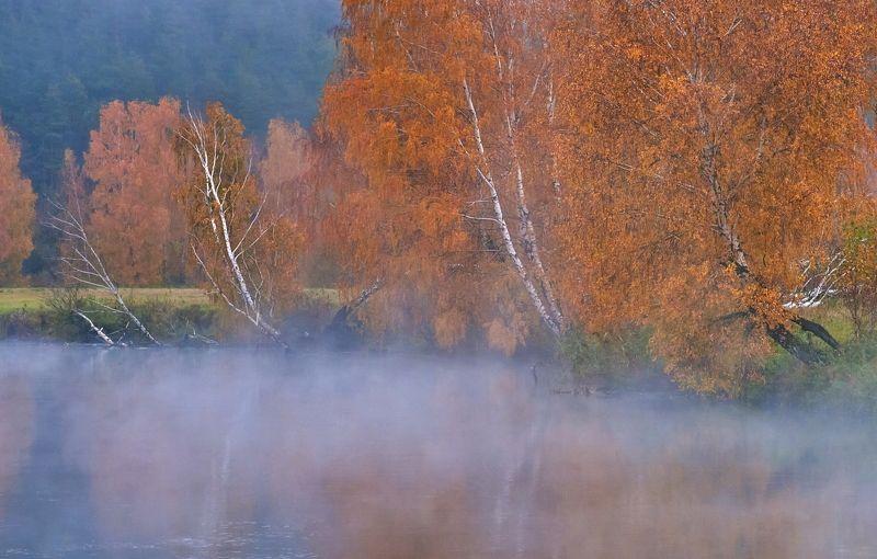 осень, природа, свислочь, утро, туман Осень на Свислочиphoto preview