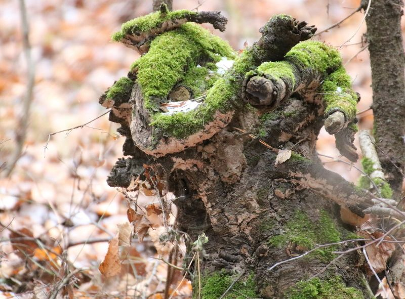 мох, пенек чудо Улыбка природыphoto preview