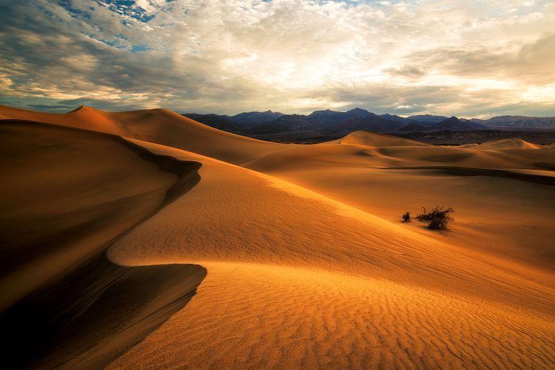 sunrise, desert, dunes, sand, death valley national park, california, mesquite, mojave, sun, travel, landscape, summer, hot, Sunrise in Desertphoto preview