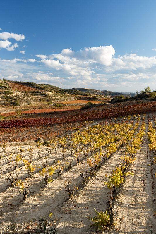 La Rioja.photo preview
