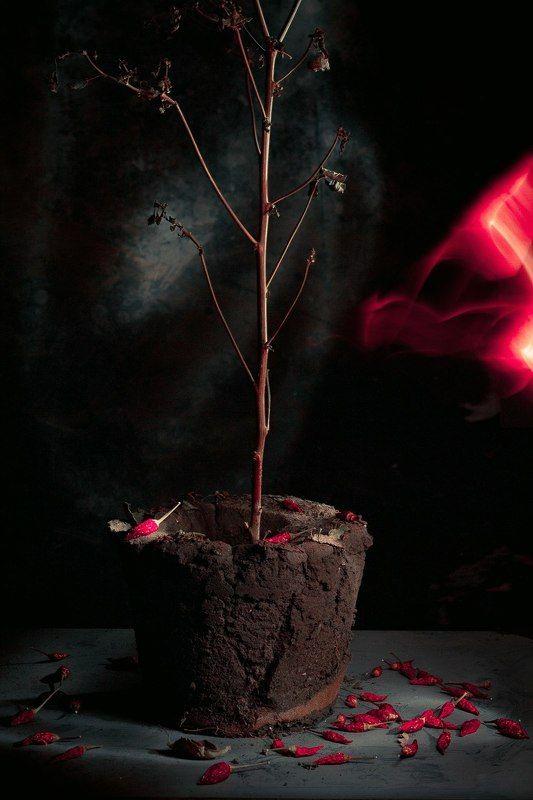 острый перец, засохшее, земля, растение, куст, натюрморт, красный, Gonephoto preview
