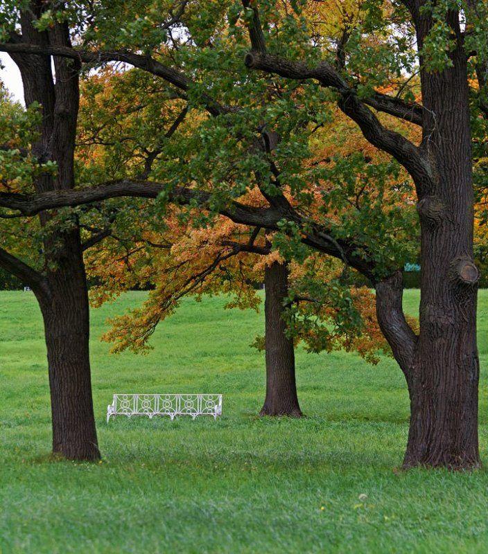 осень, парк, скамейка Настроение осениphoto preview