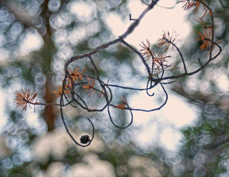 лес , сосна , крючок для белок Лесные снастиphoto preview