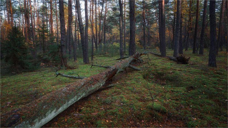 В хвойном лесуphoto preview