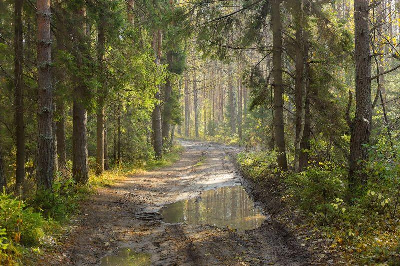 лес утро осень Утро в лесуphoto preview