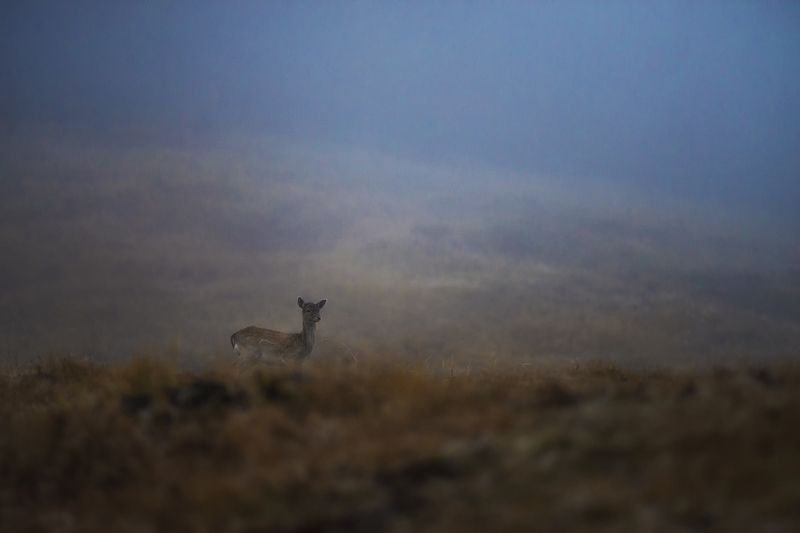 #deer #forest #photohunt #animals #foggy #field Девушка.photo preview