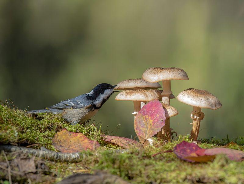 природа,лес,грибы,осень, Любитель грибов.photo preview