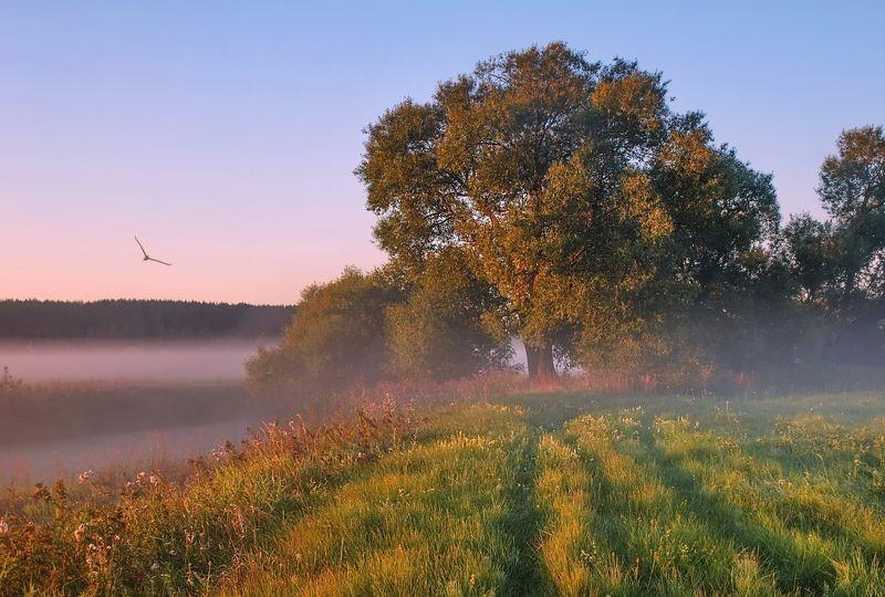утро, туман, солнце Летом на рассветеphoto preview