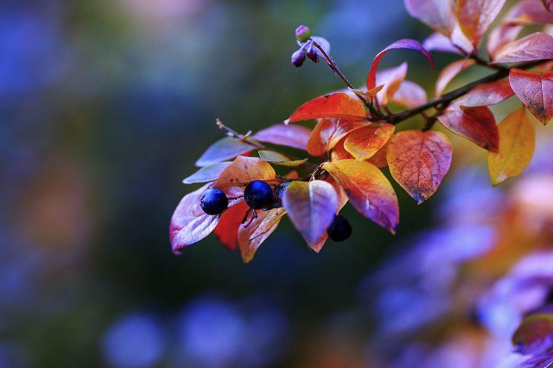 Осенний ноктюрнphoto preview