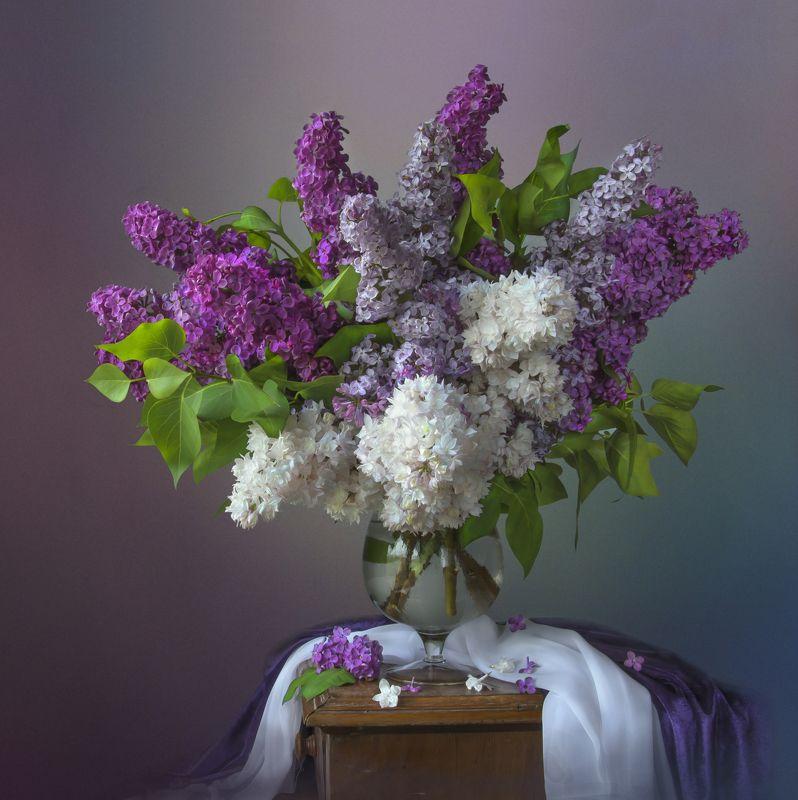 красивый натюрморт с сиренью,цветы,букет,художественное фото,творчество,искусство. Букет сирени.photo preview