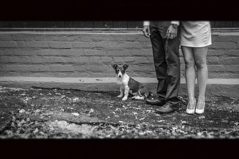 животные,собака,собачка,Ervitta Dog,девушка,мужчина,ноги,ножки,взгляд,парень,пес,ч/б,черно белое,фото,свадьба,стрит,стрит фото,репортаж,красота, Собачка Эрвиттаphoto preview