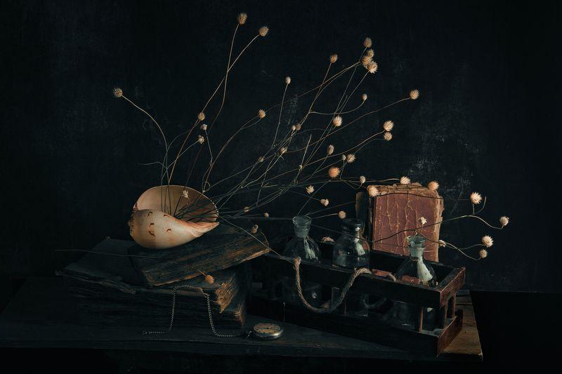 ракушка, бутылки, стекло, книги, часы, карманные часы, старые, сухоцвет, натюрморт with sea shellphoto preview