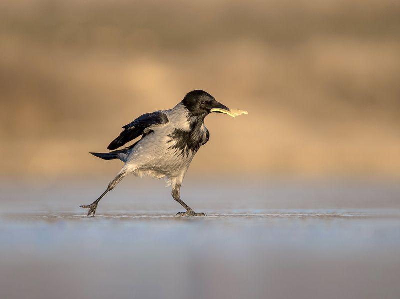 птицы,природа,зима, Вороне где то....photo preview
