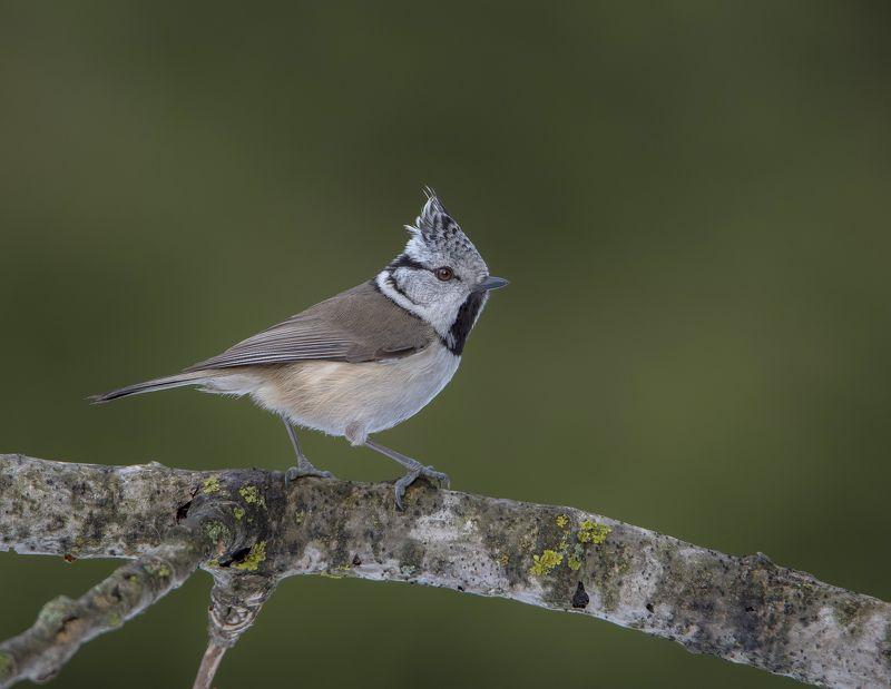 птицы,природа,зима, Гренадёркаphoto preview
