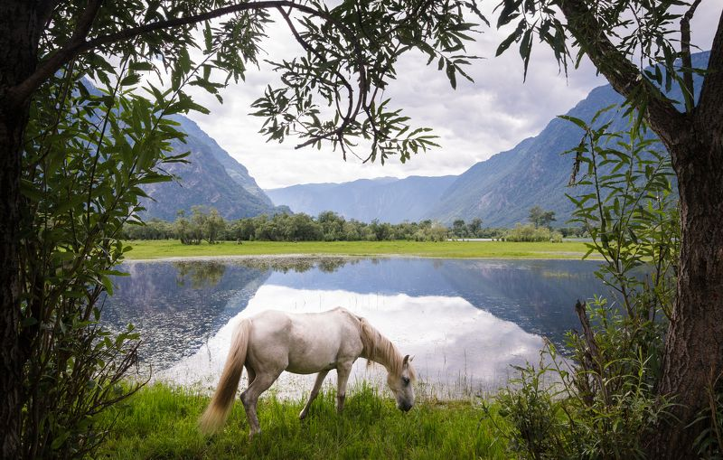Алтай, животные, лошадь, Россия, пейзаж, озеро, горы, отражение Телецкоеphoto preview
