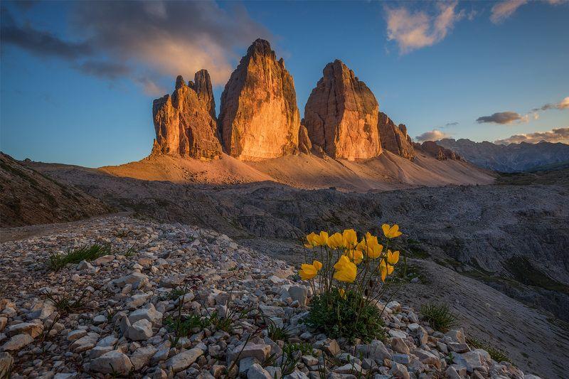 италия, доломиты, альпы, осень, italy, dolomites, tre cime di lavaredo, тре-чиме-ди-лаваредо Горные цветы.photo preview