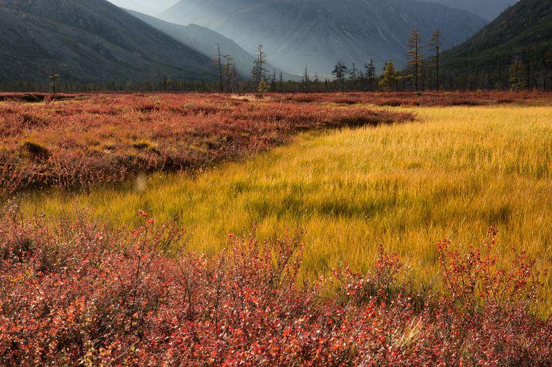 осень, колыма, болото, даль, горы, свет, деревья, цвет Очарование колымской осениphoto preview