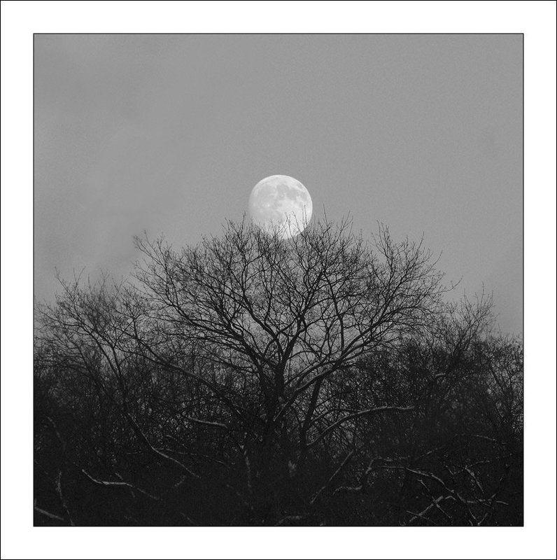 луна, лысая гора Где-то на Лысой Горе...photo preview
