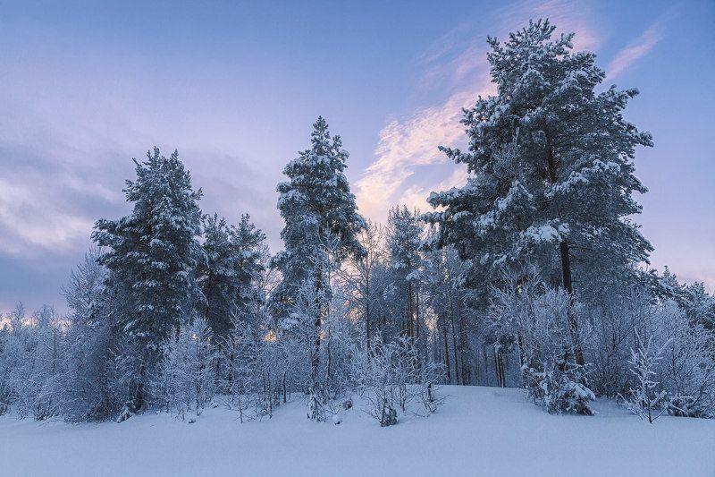 вечер, зима, лес, иней, снег, кусты, деревья Угасает зимний деньphoto preview