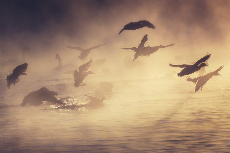 Алтай, заказник лебединый В лучах уходящего солнцаphoto preview