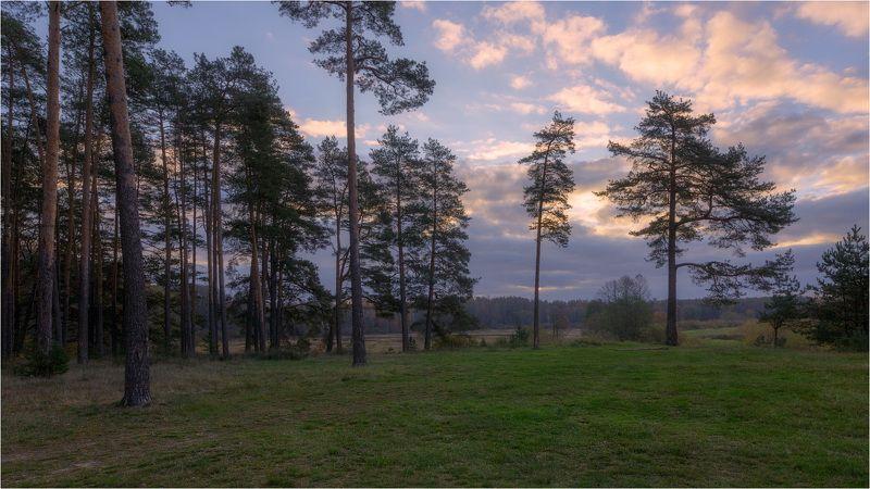 У леса на опушкеphoto preview