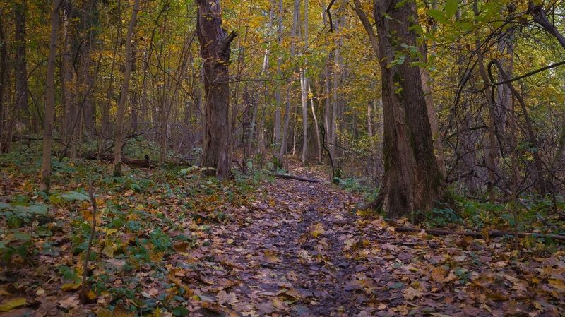 Осень в лесуphoto preview