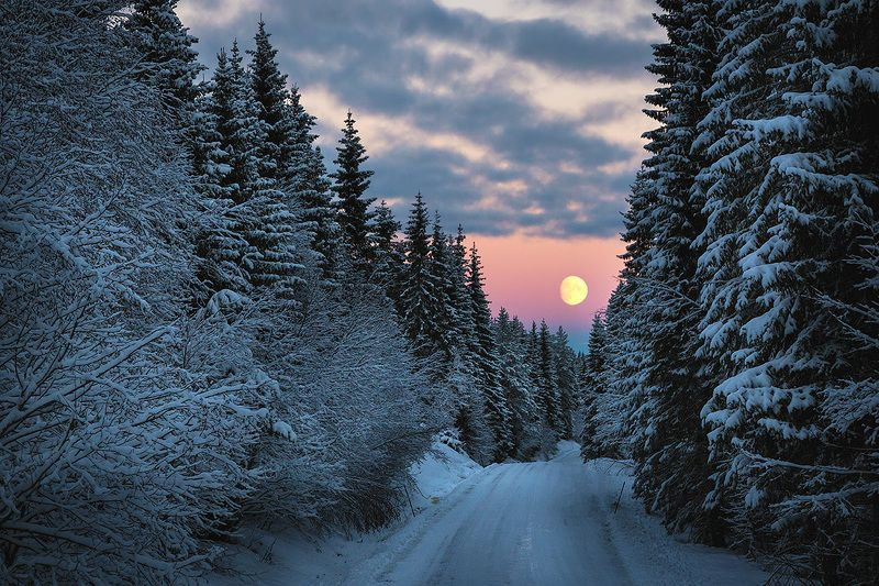 winter, norway, forest, fullmoon, moon rise, snow, snowy, norwegian, road, Christmas forestphoto preview