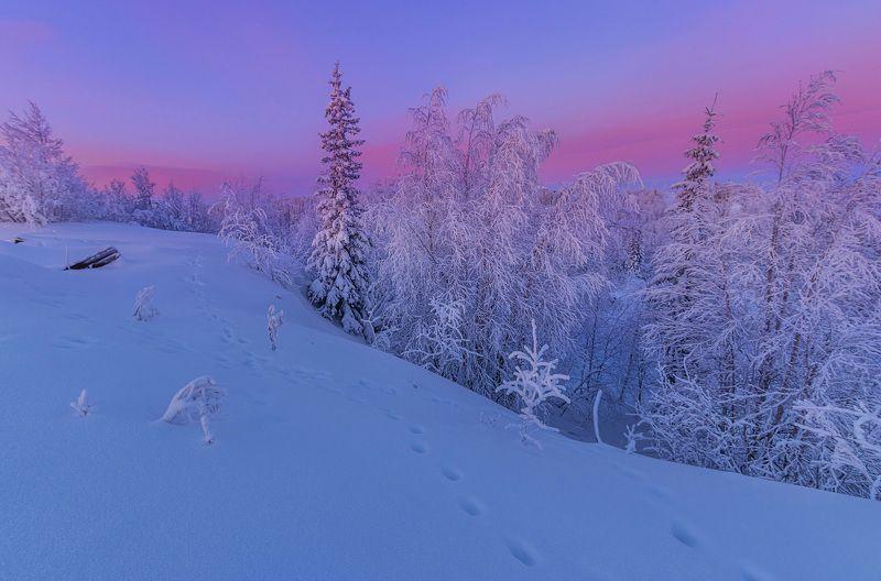 ямал , зима , природа, салехард , декабрь,  ямал ,север \