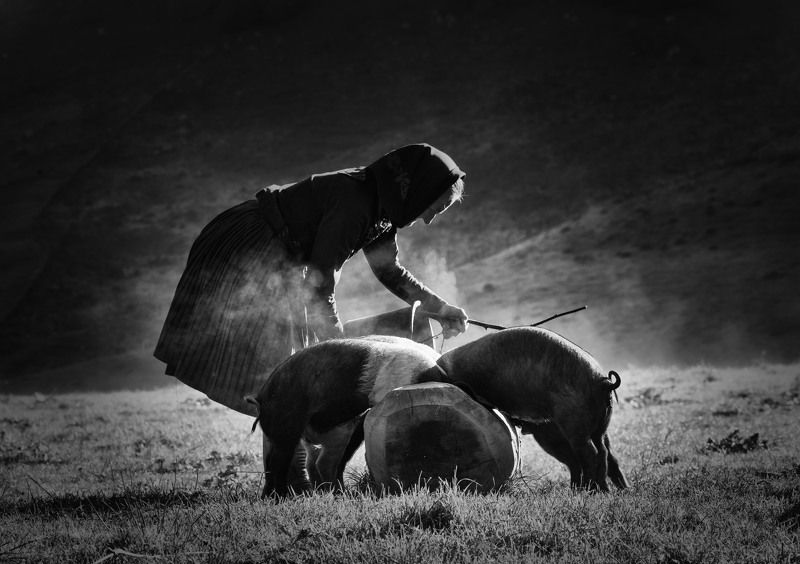 rural, idyll, landscape, village, mountain, river, sunrise, light, spring, pigs photo preview
