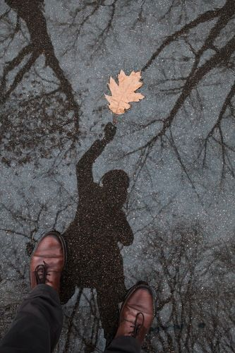 Ты неси меня листок в заснеженный декабрь