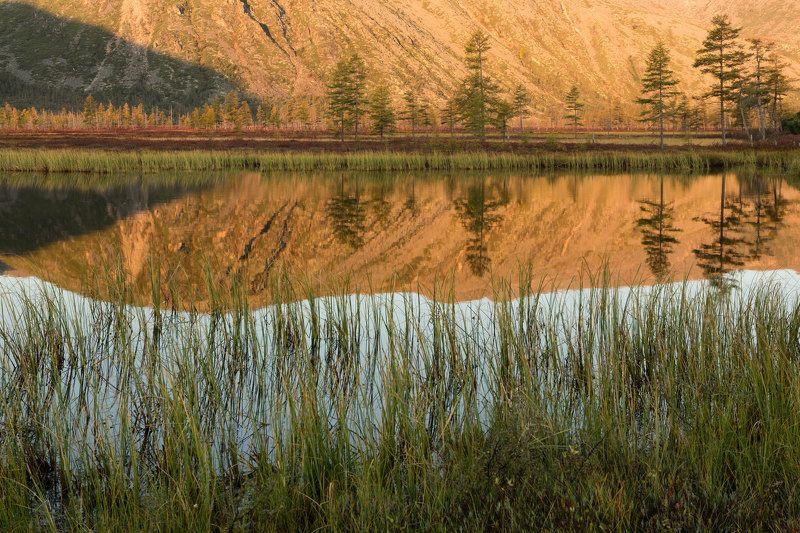 озеро, рассвет, тишина, отражение, деревья, трава, утро, горы, колыма, дальний восток, антон селезнев, осень Утренний взгляд в зеркалоphoto preview