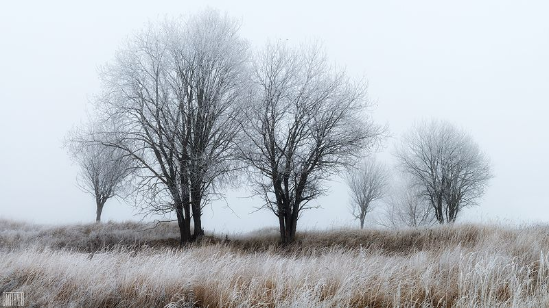туман, иней, утро, деревья, осень, Туманыphoto preview