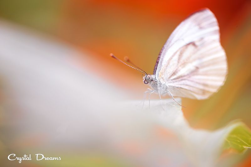 crystal dreams, macro, summer, color, art, nature, butterfly In my fantasyphoto preview