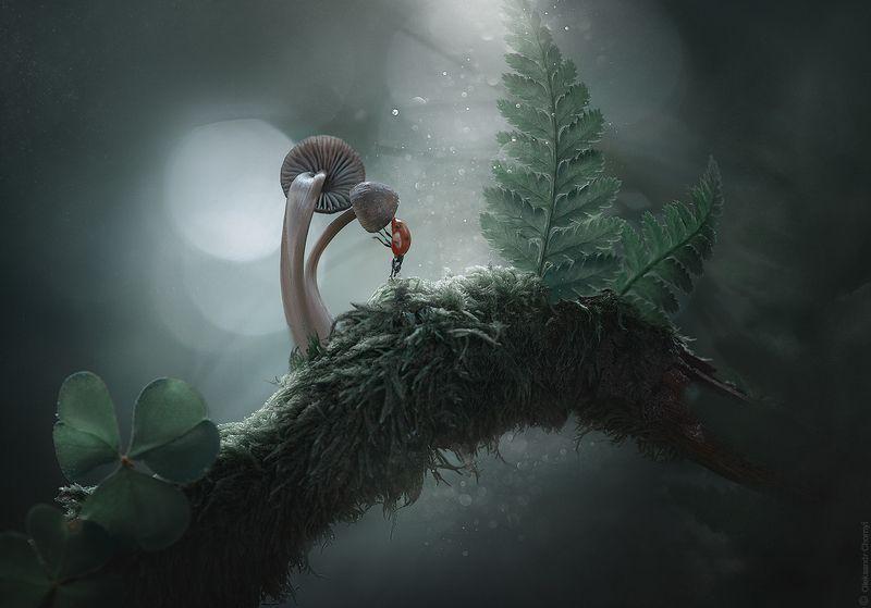 украина, коростышев, природа, лес, таинственные миры, красивая природа, гармония, загадочный, волшебство, enigmatic, божья коровка, папоротник, грибы, лес, макро, макро истории, макро мир, макро красота, сказка, цвета, зеленый,  умиротворение, Таинственные мирыphoto preview