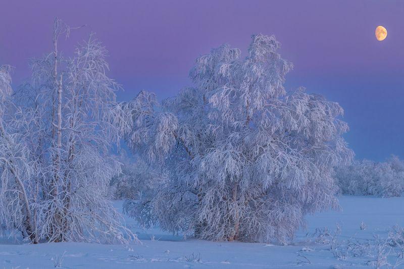 ямал , зима , природа, салехард ,сибирь,  ямал ,север в холодном пленуphoto preview